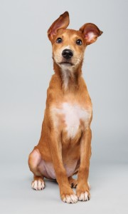 Debbie, who will be competing in the Puppy Bowl this Sunday, is one of the dogs rescued by The Sato Project and adopted through its Boston sanctuary in Dedham. Puppy Bowl X will air Sunday, Feb. 2, starting at 3 p.m., on Animal Planet.