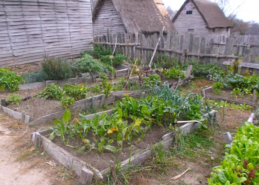 A garden in the Pilgrim village at Plimoth Plantation on Oct. 28, 2015.