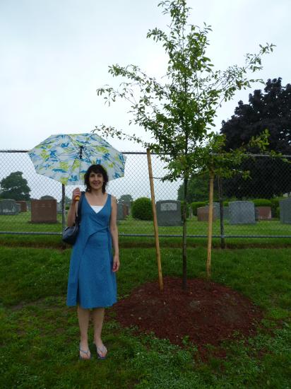 Cunniff School third-grade teacher Debbie Munger stands next to the new Black Gum tree donated by the town in honor of her friend and colleague Beverly DiMascio, who died in 2011.